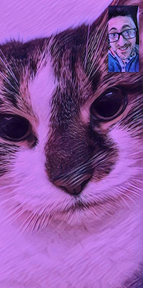 facetime tipsy cat
